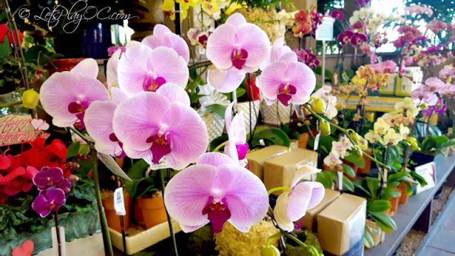 How To Care For Orchids With Armstrong Garden Centers