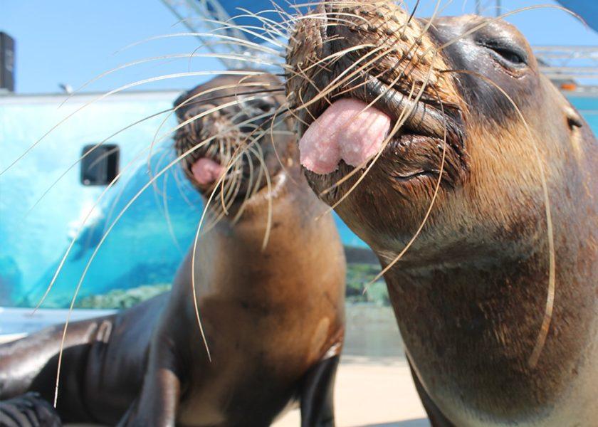 America Pet Expo Sea Lions